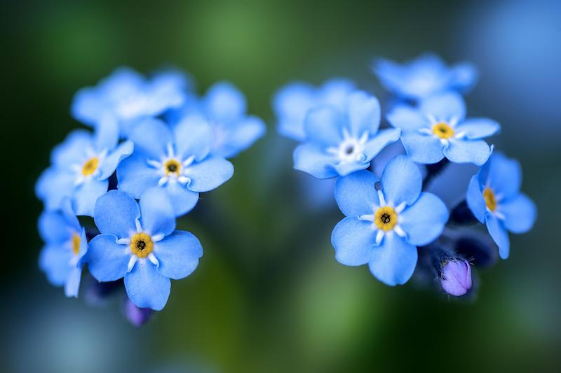イメージ画像(青い花)